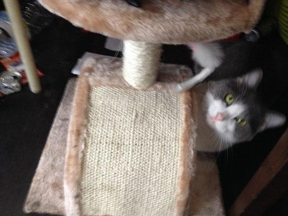 カギの救助隊福岡南本店 猫の花子