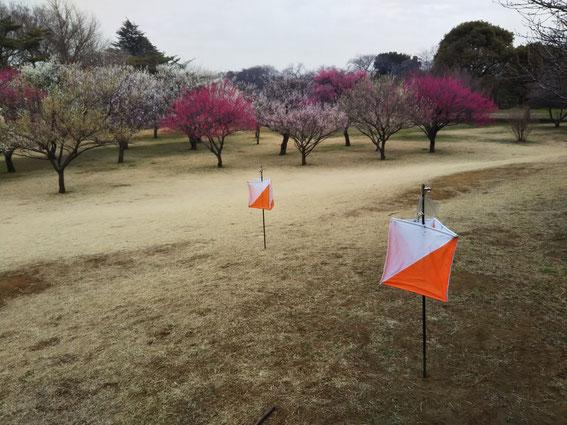 梅の香が漂う野川公園