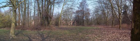 Plateau derrière la caserne, pelouse, Platanes, Saules blancs et Aulnes cordés, vue sur résidence Irena (arrière plan), mars 2013
