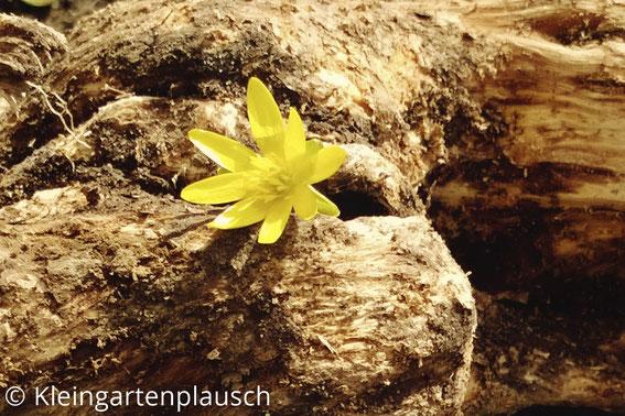 Ein Stück Holzwurzel mit einer gelben Blüte, die dort hineingesteckt ist.