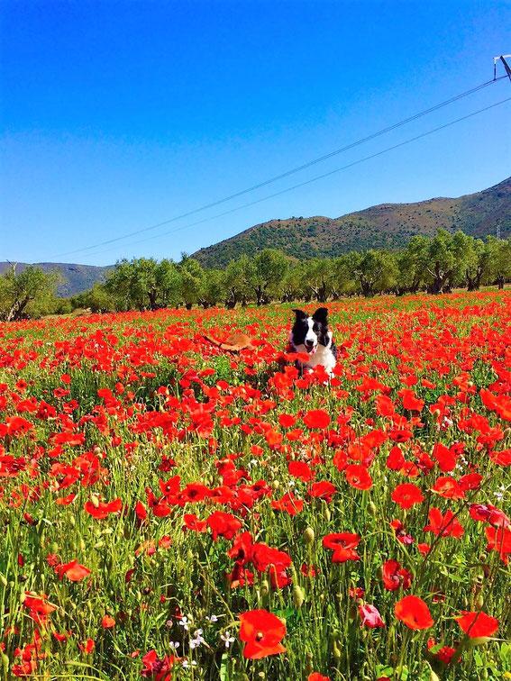 Urlaubsgrüße aus Spanien!