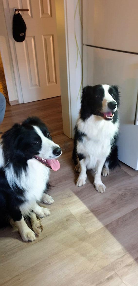 Eimo (rechts) mit Halbbruder Glenn !