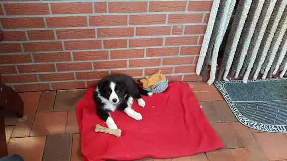 Glenn, gestern neun Wochen alt und mittlerweile 6 kg schwer.