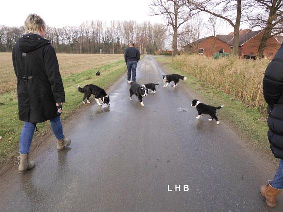 Gemeinsamer Spaziergang mit allen Hunden beim Auszug Zappa u. Frida!