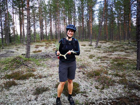Mountain Biking Schweden Rentiergeweih in Lappland Aktivurlaub