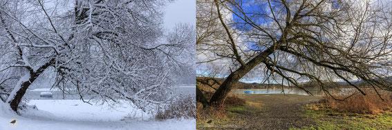 Eschenz TG, Nilibucht b. Insel Werd, 30.12.14 und 04.01.15 (Fotos: S. Trösch)