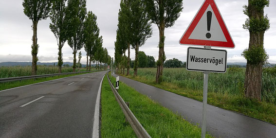 Hauptstrasse Moos-Radolfzell, 02.07.16 (Foto: S. Trösch)