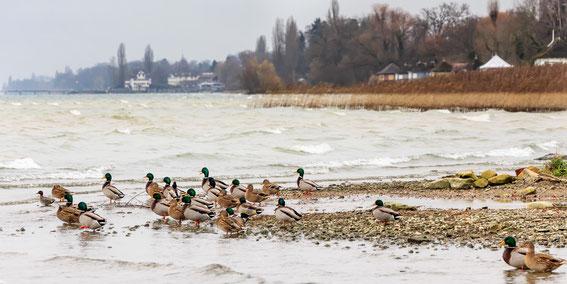 Stimmungsbild vom 03.12.14 in Kesswil TG (Foto: S. Trösch)