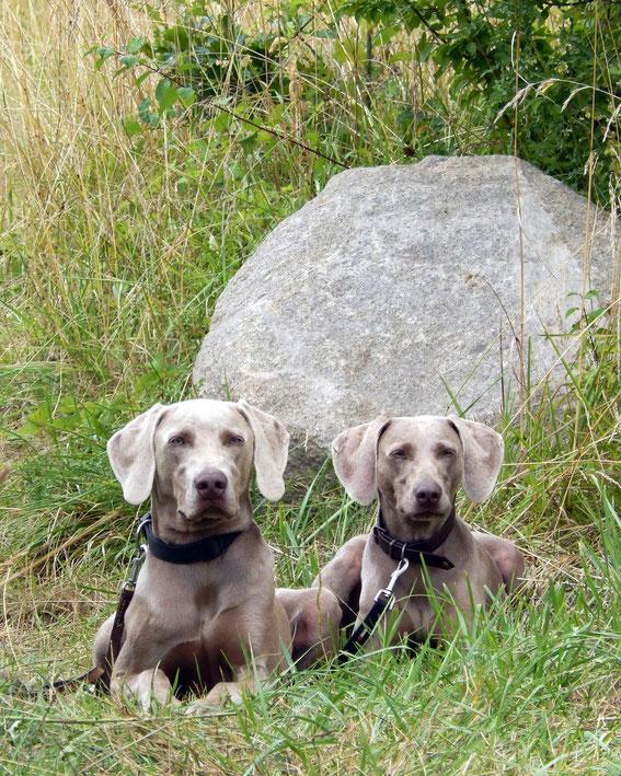 Aragon & Freya