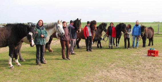 Die Kursteilnehmer. Dass die Ponies fast wie die 7 Zwerge aufgereiht stehen ist mir erst beim Ansehen des Fotots aufgefallen.