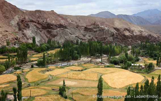 Basgo Castle, Ladakh