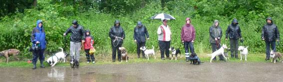 Hundespaziergang, Mausi ist die dritte von links.