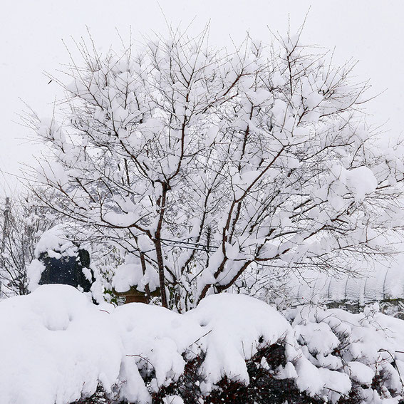 Leica D-lux7 雪の高山