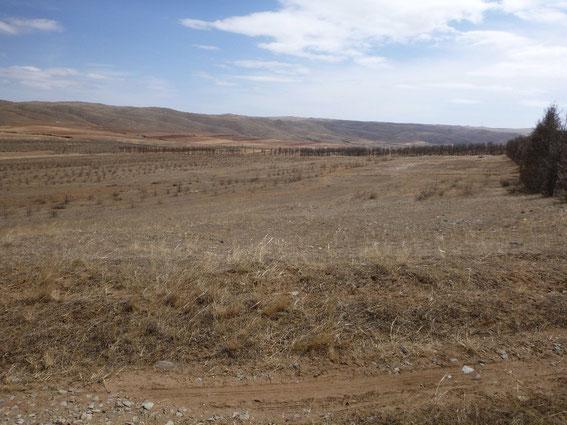 植林予定地。今までの実績から、中国政府からの依頼を受けて新たな土地での緑化をはじめることに。ここが、DRYandPEACEの杏の林になる日を夢見て
