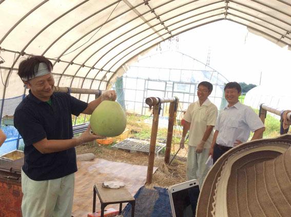 干瓢の剥き方を説明してくれる小野口商店の皆さん。この一玉から250gほどの干瓢(干し上がったもの)ができる。