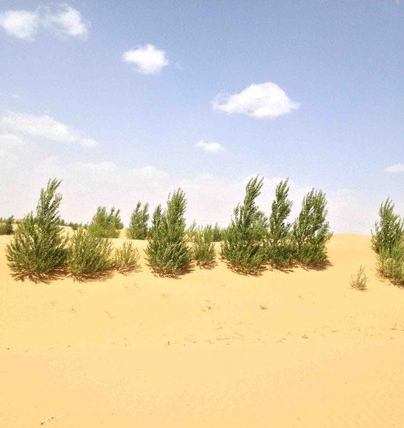 根付いて育つ木々