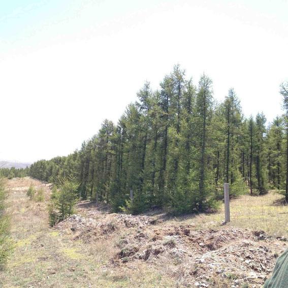 20年たった林