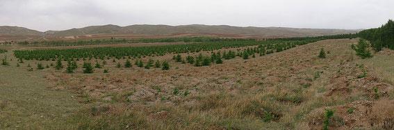 植林地の全景。確実に緑が増えているのがわかります(下の方に昨年以前の写真があるのでスクロールしてみてくださいね)