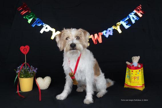 Data feiert seinen 2. Geburtstag