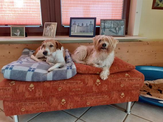 Isabela und Elba auf ihrem Relax Sessel