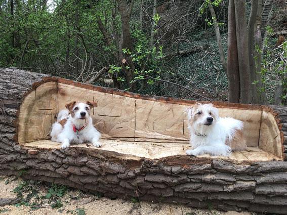 Colja und Bruder Toffee im Frühling