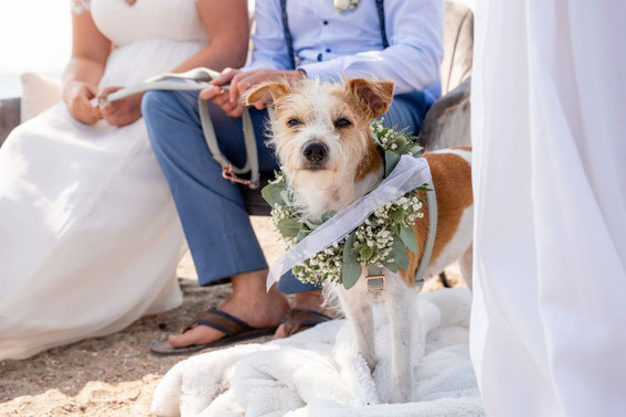 Havanna begleitet die Hochzeit ihrer Menschen