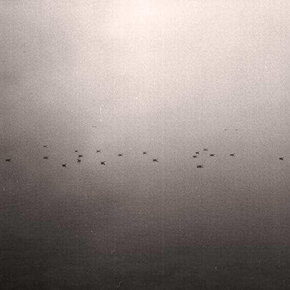 Strauch vor leerem Hintergrund in schwarzweiß