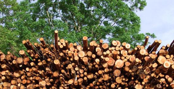 Heimisches Holz hat Zukunft!