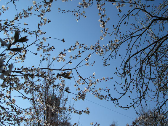 VIVA Sprachkurse: Frühlingssprache im Park | März 2020