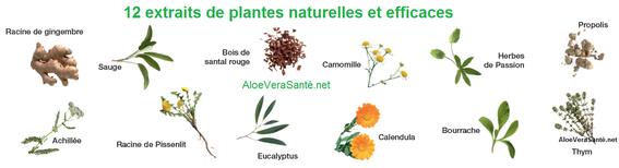 Aloe vera pur et 12 extraits de plantes efficaces pour vos soins - LR ALOE VIA