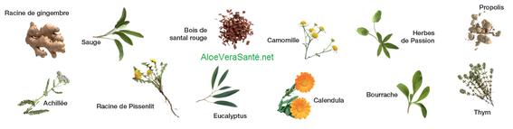 Aloe vera pur et 12 extraits de plantes efficaces pour vos soins