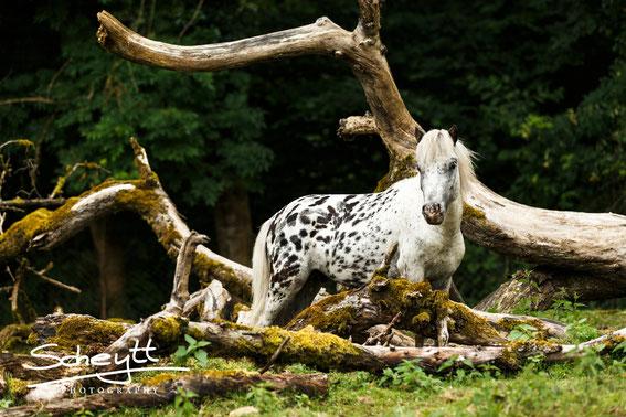 Pferdefotografie: Buchen Sie jetzt ihr Fotoshooting mit Pferd und erhalten Sie einmalige Fotos!
