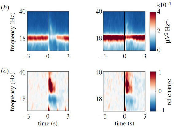 Spontaneous alpha and odour-induced gamma oscillations in the mushroom bodies of honey bees