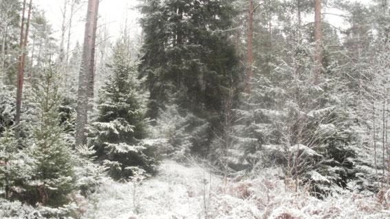 Winterwald (Foto: A. Manz)