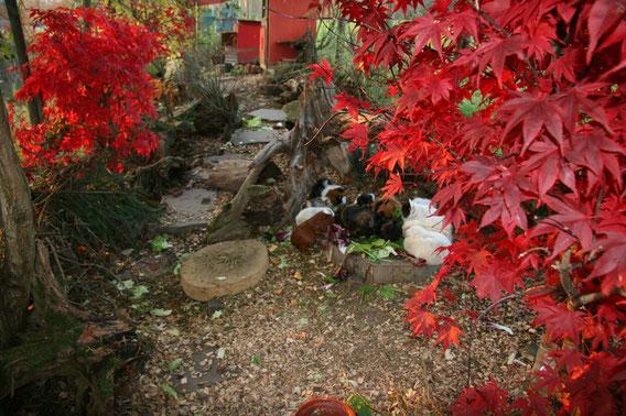 Herbst Gehege Oktober 08