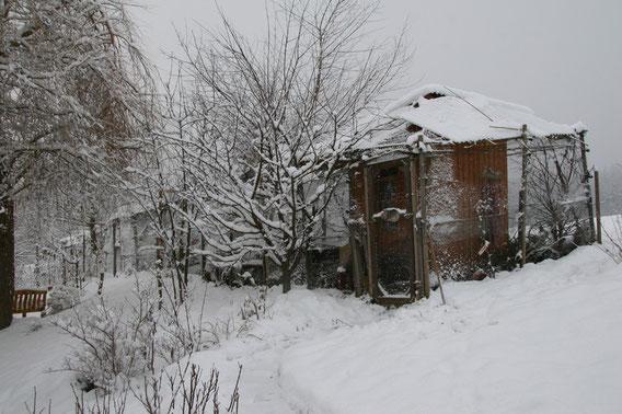 Gehege im Schnee 12.08