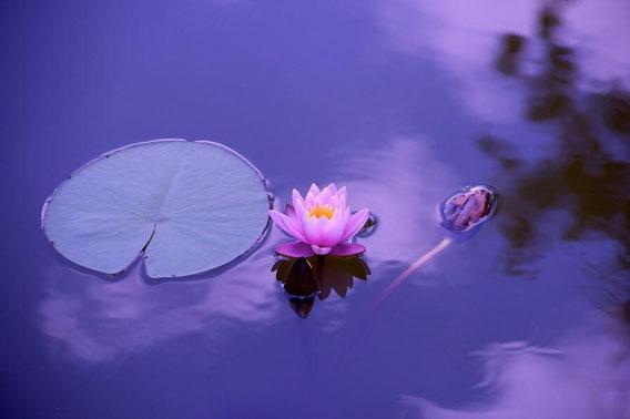 水に浮く花と葉