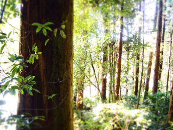 森に暮らしたいねー。