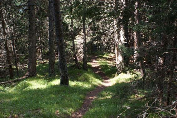 Auf- und Abstieg führen über weite Strecken durch den Wald