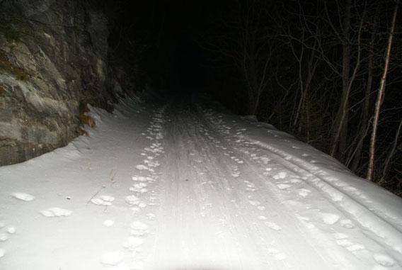 Meist heißt es früh starten, um bei der Abfahrt perfekte Verhältnisse vorzufinden, hier am flachen Forstweg