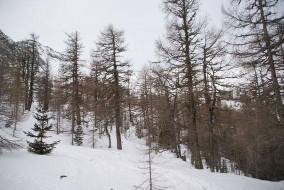 Am Ende des Waldes bei der Jagdhütte