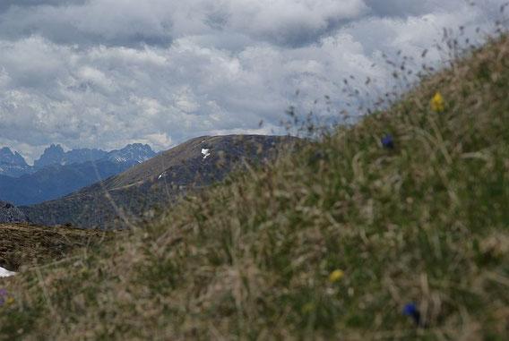 In der steilen Wiesenflanke