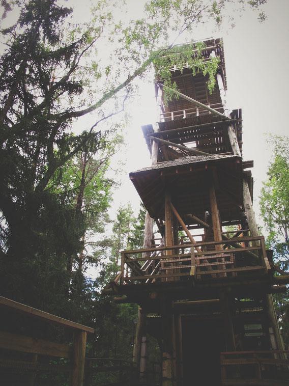 BIGOUSTEPPES LETTONIE TOUR BOIS PAYSAGE PARC
