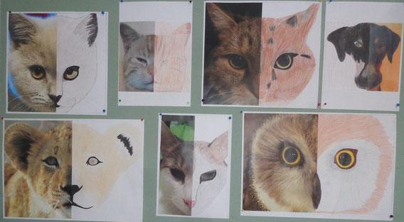 4. Kl.: Wir malen die Fotos unserer Tiere weiter