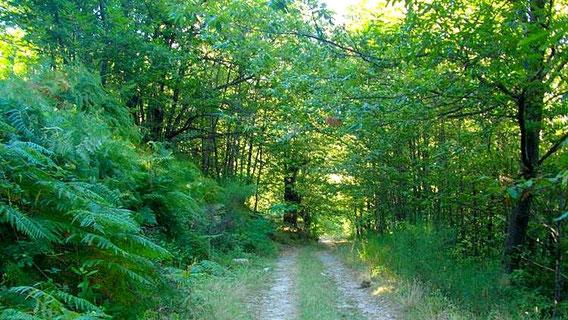 Paysage de forêt en Ardèche