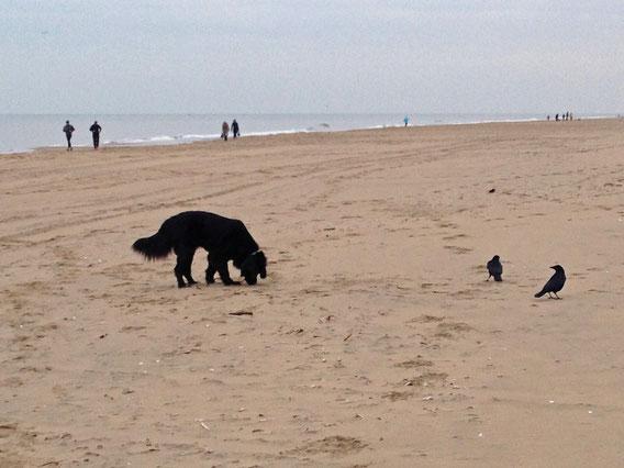 Vanja am Strand. Der Sand ist viel spannender als die Krähen.