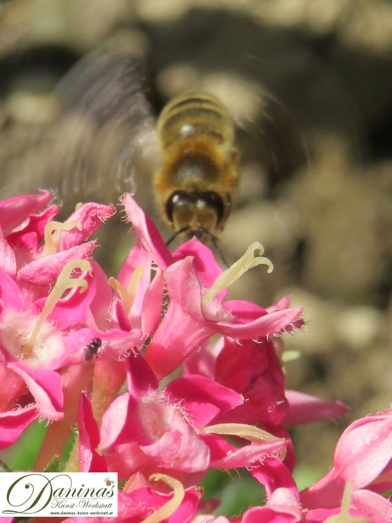 Nützliche Honigbiene und andere Bestäuberinsekten schützen - zum Erhalt der Artenvielfalt