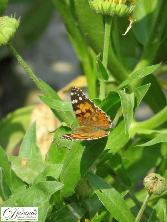 Schmetterling auf Ringelblume. Die wichtigsten Bestäuberinsekten und die wesentlichen Gründe für das Insektensterben.