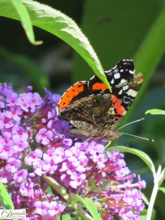Schmetterlinge zählen zu den wichtigsten Bestäuberinsekten und sorgen für den Erhalt der Artenvielfalt von Pflanzen.