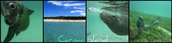 Carnac Island Sea Lion Eco Tour
